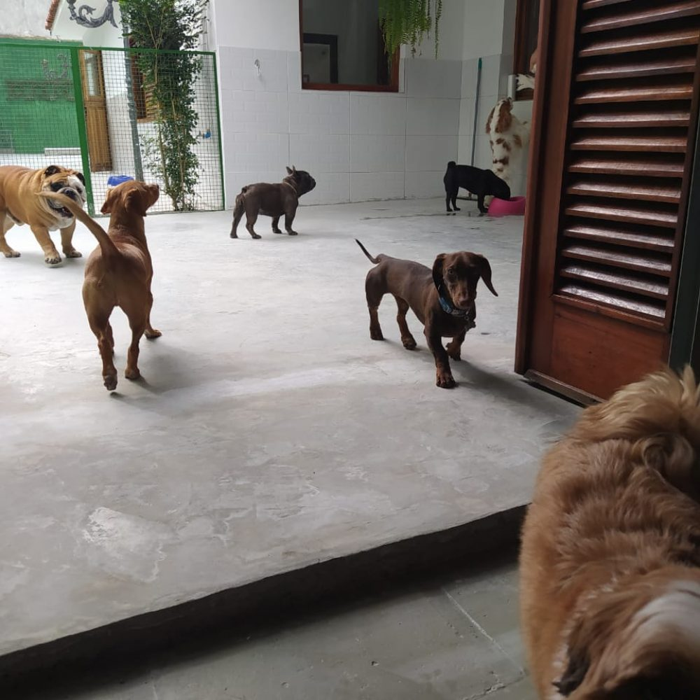 daydogWhatsApp Image 2020-08-06 at 19.24.15 (1)